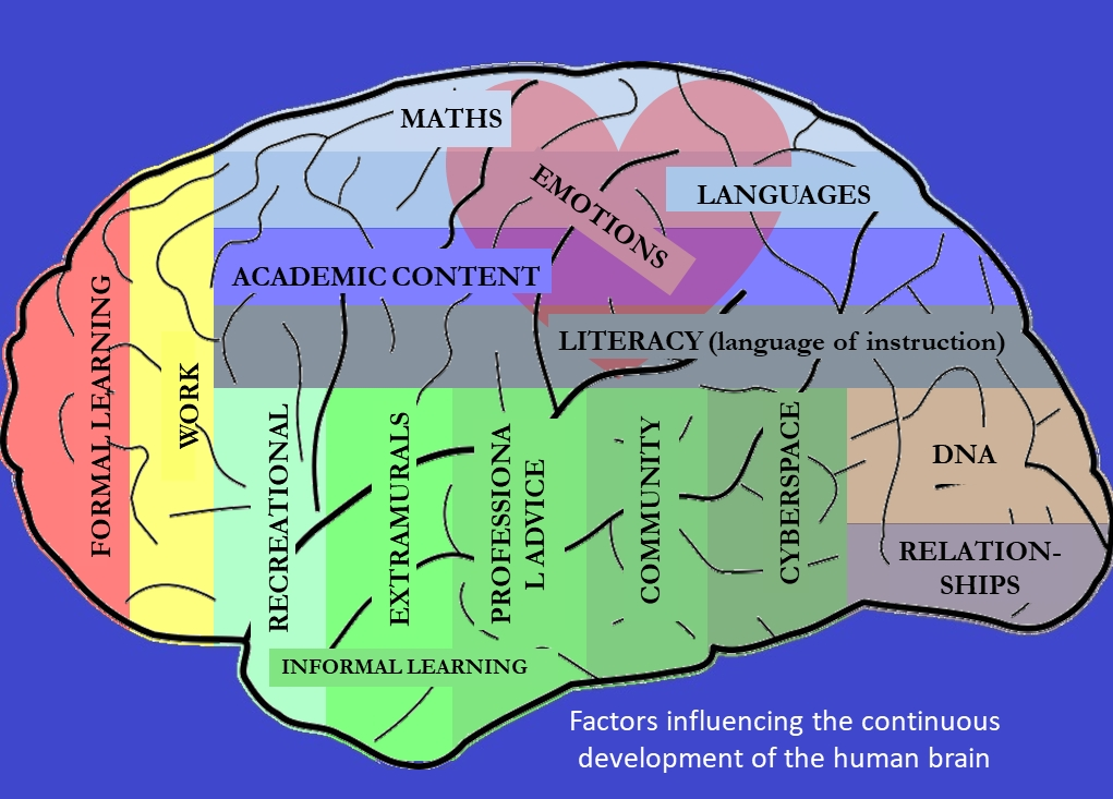 Factors influencing the continuous development of the human brain. Patricia Furstenberg for ITSI #MBEafrica18