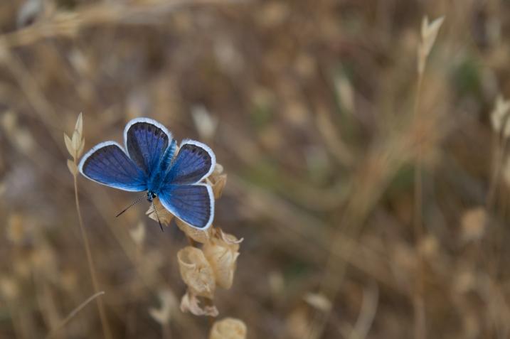 Haiku-San, Butterfly, #Haiku #Sunday #HaikuSan via @PatFurstenberg