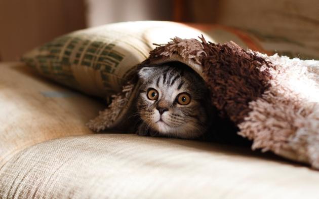 Haiku-San, Cat, #Haiku #Sunday #HaikuSan via @PatFurstenberg