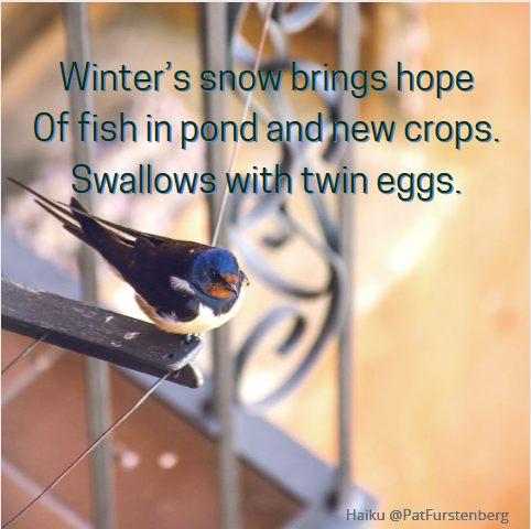 Hope, #Christmas #Haiku via @PatFurstenberg