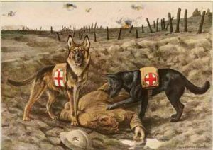 WW1-medical military dogs
