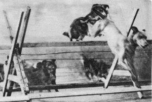 messenger-dogs-in-training - source alpinepub.files