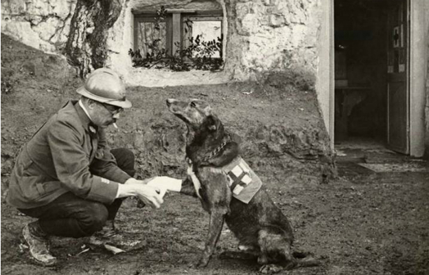red cross dog WWI- foreignpolicy