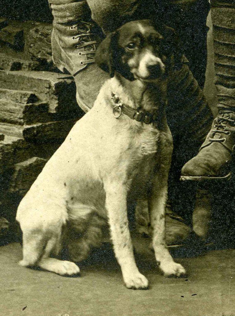 Terrier dog, war mascot 1918