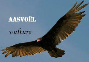 Aasvoël  - bait bird - vulture