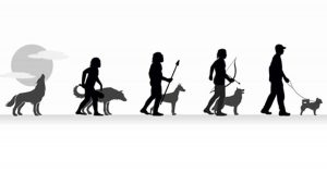 How dogs helped the human brain to evolve