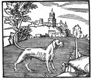 Book-Illustration of a dog from George Turbervile 1576 Booke of Hunting. Google Books Public Domain