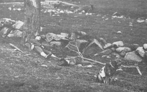 France, WW1. A training picture here shows a dog waiting for stretcher bearers where the wounded are lying. source doglowreporter