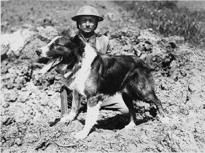 Messenger dog with its handler, in France, during World War I