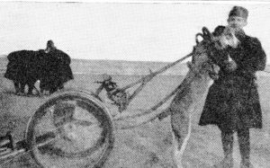 Amazing Roles dogs Played During WW1, part 3: Sled Dogs, Pulling Dogs. The Belgian soldiers were very attached to the dogs which drew their mitrailleuse guns, Source owlcation