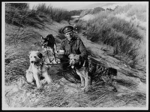 Amazing Roles Dogs Played during WW1, part 2: Scouts, Sentries, Ambulance and Messenger Dogs.WW1 British messenger dogs and their handler