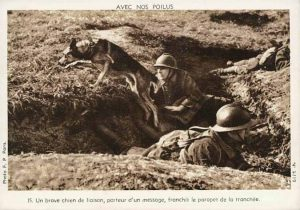 A messenger dog during WW1