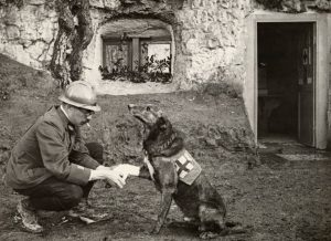 Allied soldier bandages the paw of a Red Cross medic-dog in Belgium, 1917.