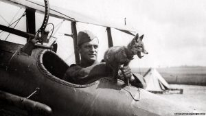 Dog Mascots of WW1 and Their Cute Faces. An RAF fox mascot sitting on a plane with the pilot during World War One. Source BBC