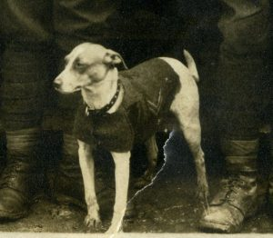 Jack Russell mascot of the 28th Division WW1