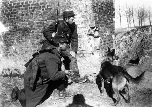 A Red Cross dog trained to search for wounded soldiers while under fire, 1915.
