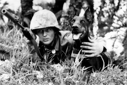 A Marine dog handler and his Doberman war dog on the island of Saipan, 1944. Source: historydaily