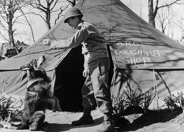 Chips, one of the first US dogs to serve in Sicily with 3rd Division of General Patton's Seventh Army, visiting the unit's doughnut tent.