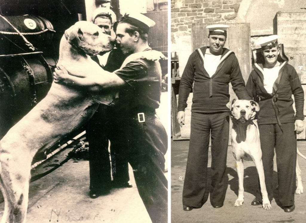 Able Seaman Just Nuisance, the 1st dog to be enlisted in the Royal Navy. Read his story here.