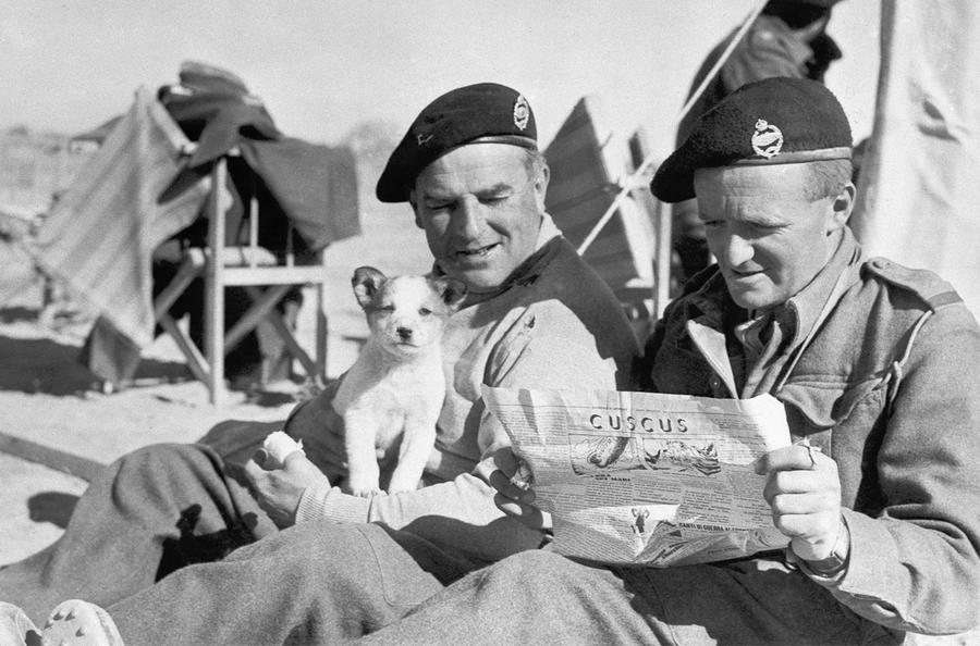 British Dogs of WW2, the Amazing, the Cute and the Incredible, North Africa campaign - two British tank men and a dog who was certainly not sniffing bombs