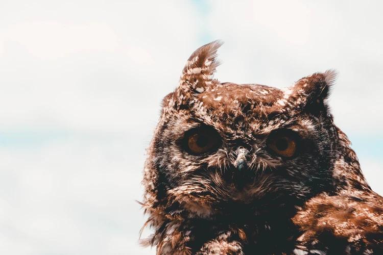 Owl, Dullstroom, South Africa, Image by @kyran12 free on Unsplash.jpg