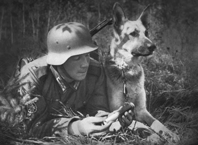 British Dogs of WW2, the Amazing, the Cute and the Incredible, A German soldier reading a message while his German Shepherd dog keeps a watchful eye over the battlefield. Source: History Collection