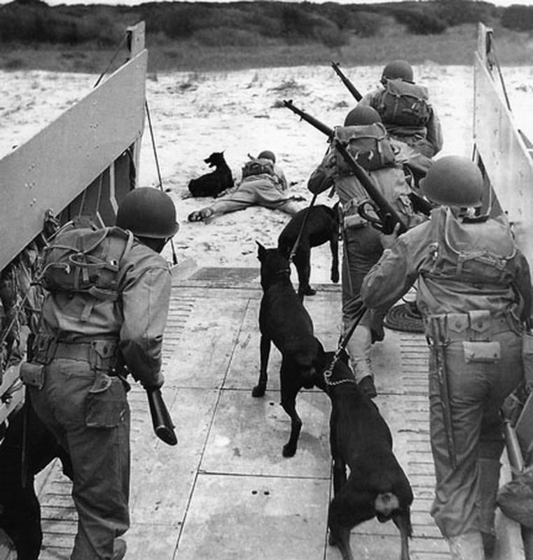 US Marines and War Dog Patrol landing on Guam Island