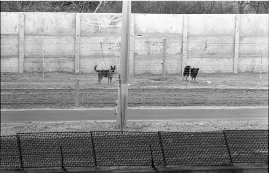 War Dogs History after WW2 to the Fall of Berlin Wall. Berlin Wall, guard dogs kept on wires. Source: Historic Approaches to Sonic Encounter at the Berlin Wall Memorial