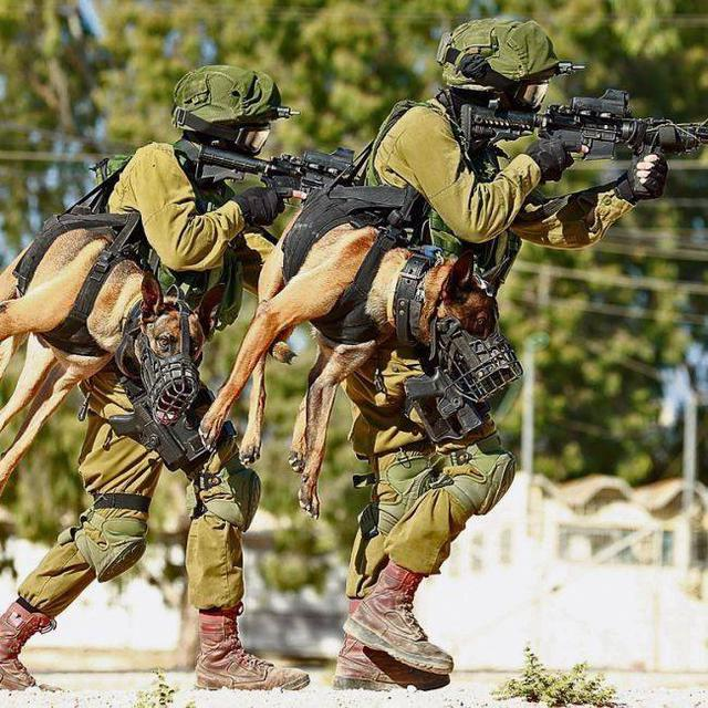 War Dogs History after WW2 to the Fall of Berlin Wall, Israel - Fighters of Oketz Unit train with their four paw comrades  Source: Censor.net.ua