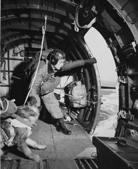 Paradogs, parachuting dogs, Korean War