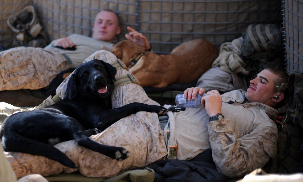 U.S. Marines attached to 1st Battalion, 6th regiment, Charlie Company relax with their bomb-sniffing dogs Books and Good one in Huskers camp on the outskirts of Marjah in central Helmand, Afgganistan, on Jan. 25, 2010. Source Foreign Policy