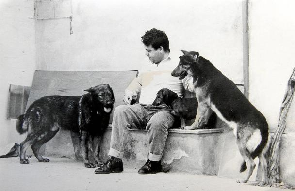 War Dogs History after WW2 to the Fall of Berlin Wall. Wall Dogs adopted: Juro, left, is one of the Wall dogs rescued by a family from Mallorca. Source: Mallorca Magazin.