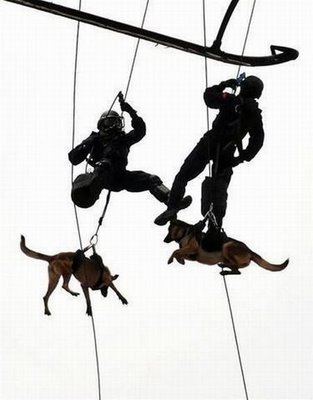 War dog canine military service SEAL team repelling from a helicopter