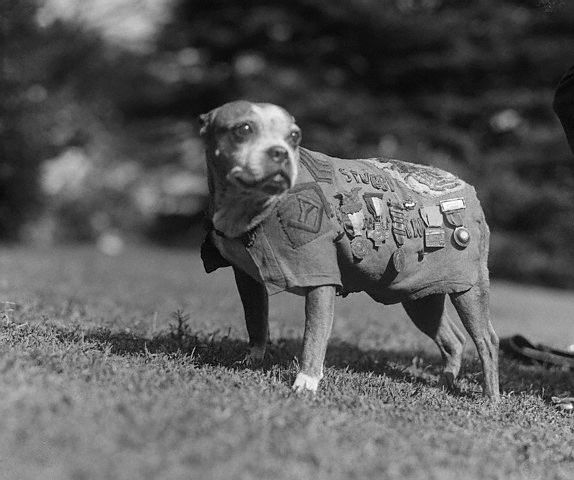 Sergent Stubby, hero dog, 7 Dogs That left their Paws on History
