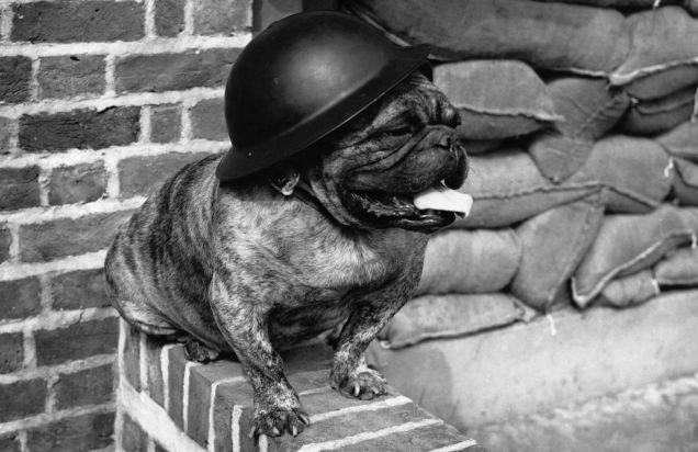 Amazing, True Stories of WW1 Dogs via @PatFurstenberg #dogs #war #WW1 #truestory #history #LestWeForget