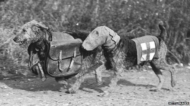 Amazing roles of dogs played during WW1. Part 2: Scouts, sentries, ambulance, messenger dogs