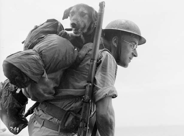 Dog Mascots of WW1 and Their Fascinating Stories