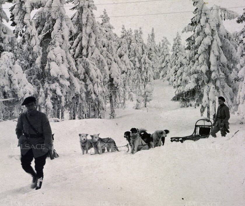 Amazing roles dogs played during WW1, part 3: sled dogs and pulling dogs