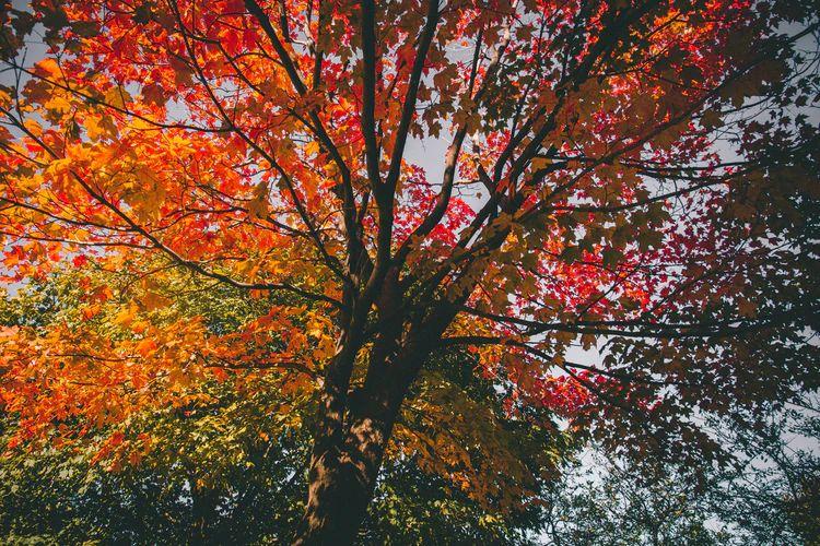 amber autumn