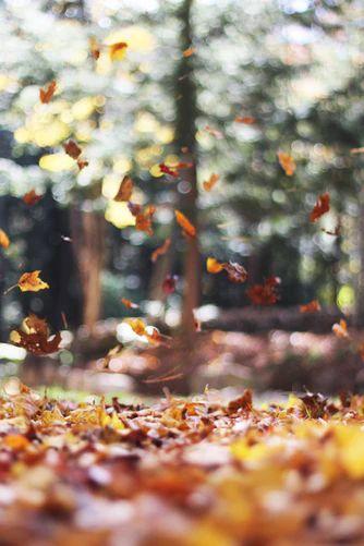auburn autumn