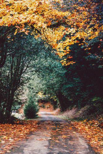 Lurid Autumn's Gold