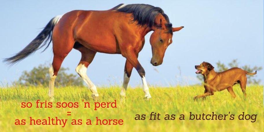 so fris soos 'n perd = as healthy as a horse, Afrikaanse vergelykings Afrikaans simile