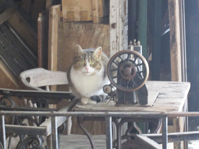 cat of Sighisoara sitting on an old sewing machine in a yard - folklore