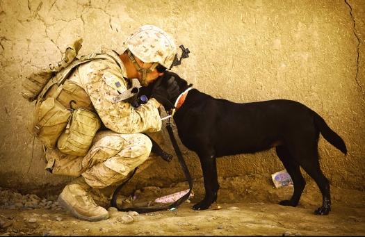 Silent Heroes of war, empathy