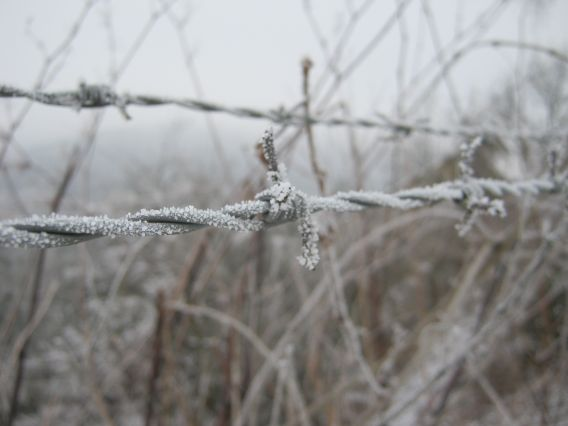 barbed wire frozen in winter