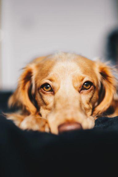 a dog's eyes speak volumes. books by Patricia Furstenberg