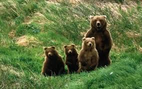 magic Romanian folktales, brown bear