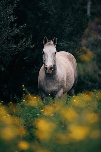 Youth Without Age and Life Without Death - magic horse