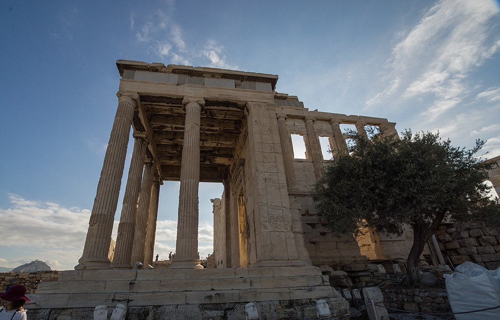 The most sacred Moria tree is on the Acropolis, Athens