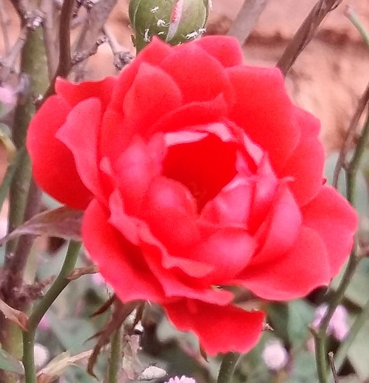 Rose End Garden poem